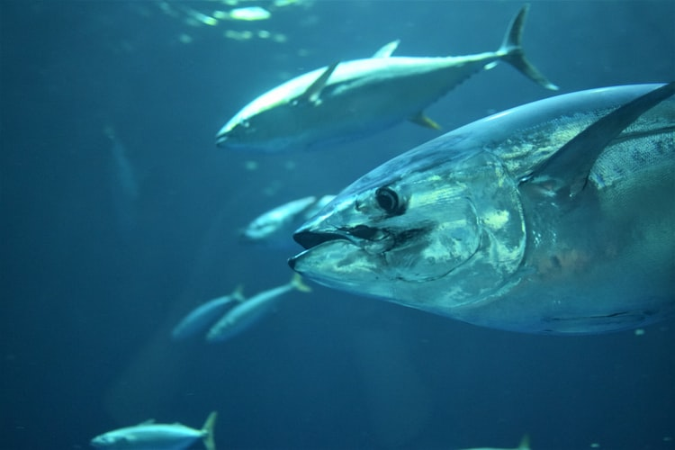 Campaigns - Offshore Fishing